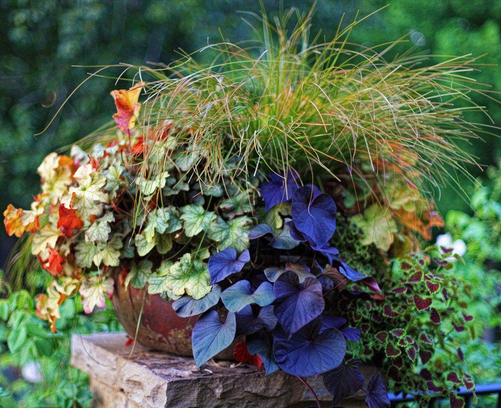 2012 Fine Gardening Container Design Challenge Submission